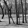 Tree Stand II _ bw