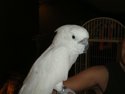 10th Album of Past Parrots Rescues in our Sanctuary