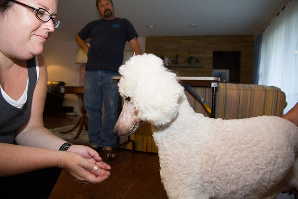 Puppies Visit 2012/07/08