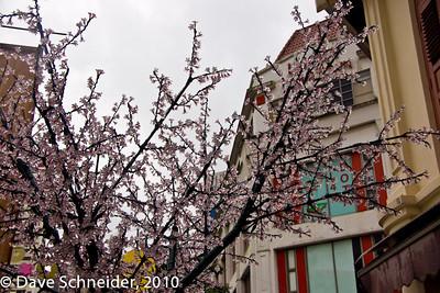 Chinatown - January 2011