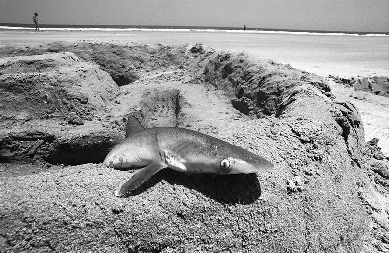 Sand Shark Castle