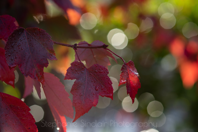 Autumn's Last Hurrah!
