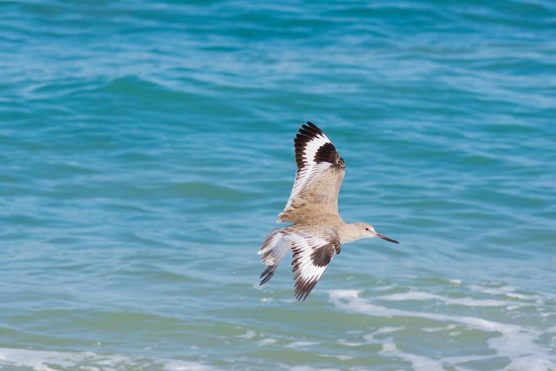 Unidentified flying bird