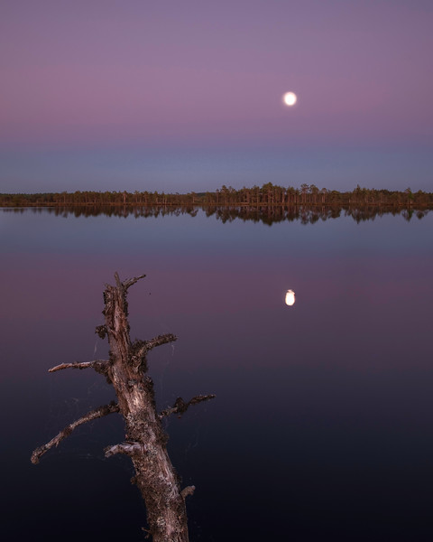 NIGHT ON BOG LAKE-ART28157-Edit 2.jpg