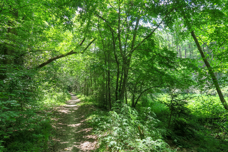 Bradley Creek Trail -- 2,410'