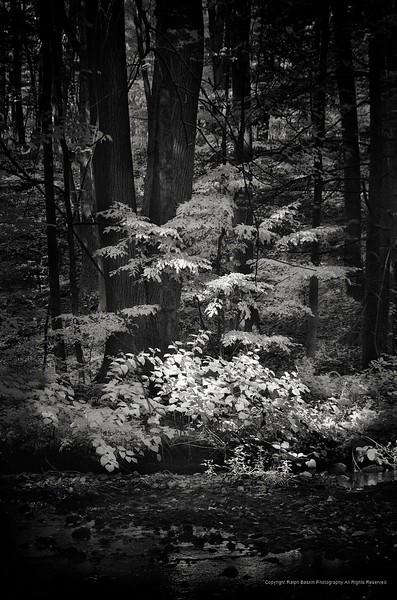 Pequonnock River Valley Park, Trumbull, CT Infrared