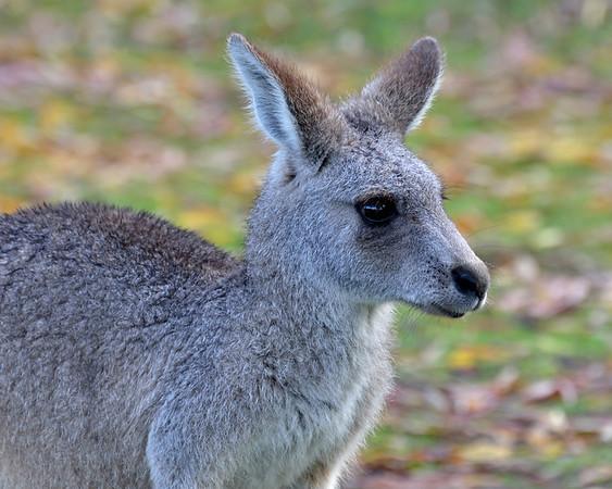 Mammals, Marsupials and Monotremes 2012 & 2013