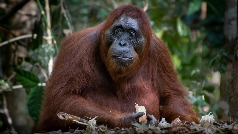 Borneo-2259.jpg