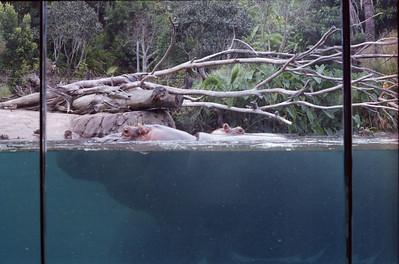 012 - Zoo
