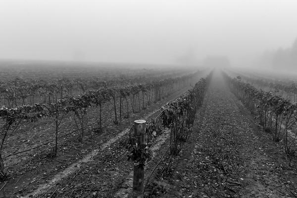 2019 01-27 Morning Fog