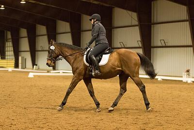 Horse 40
