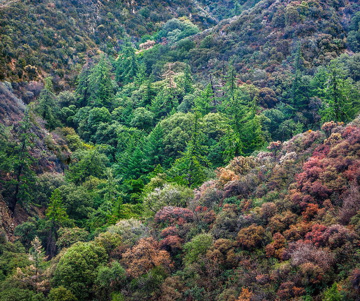 Los Pinetos Canyon - Placerita Canyon State Park 3.jpg