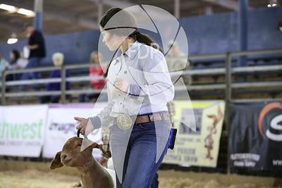 Breeding Goats Ring Shots