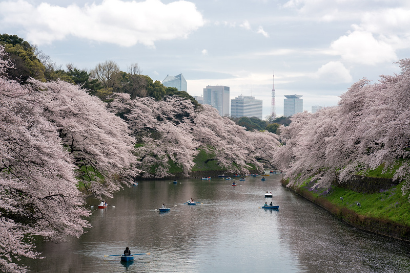 Lunchtime stroll: Chidorigafuchi and Tokyo Tower with Cherry Blossoms