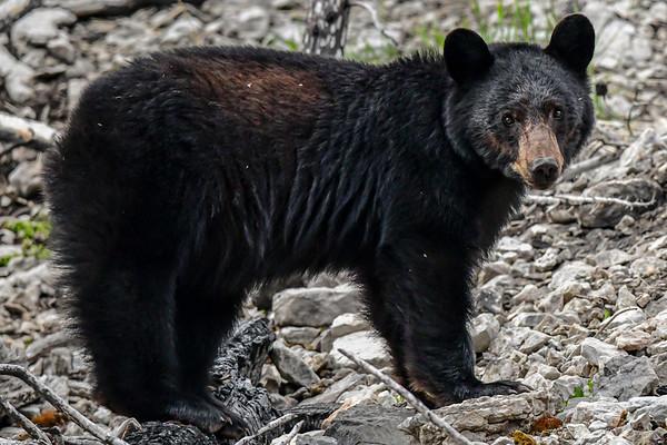 5-24-19 Black Bears - Jasper