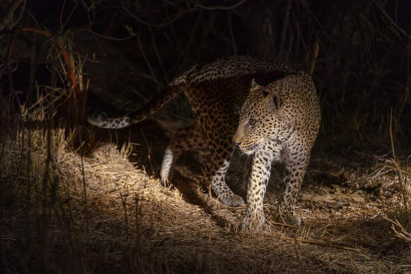 LeopardHills-20181001-4188.jpg