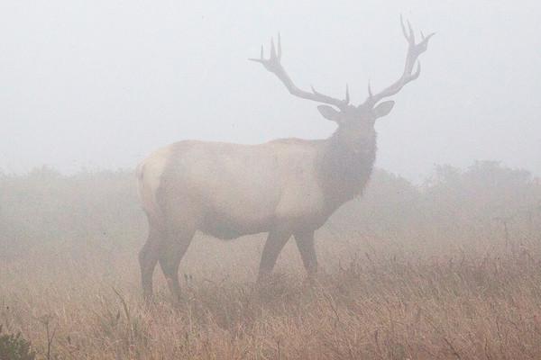 Elk Preserve PRNS August 2020