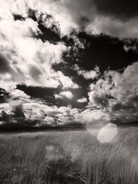 Reeds, Alviso, California, 2006