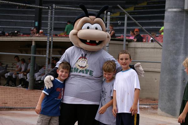 Savannah Sand Gnat Baseball