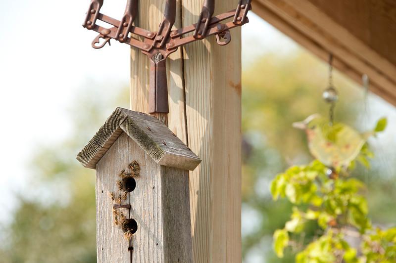 Bee House?