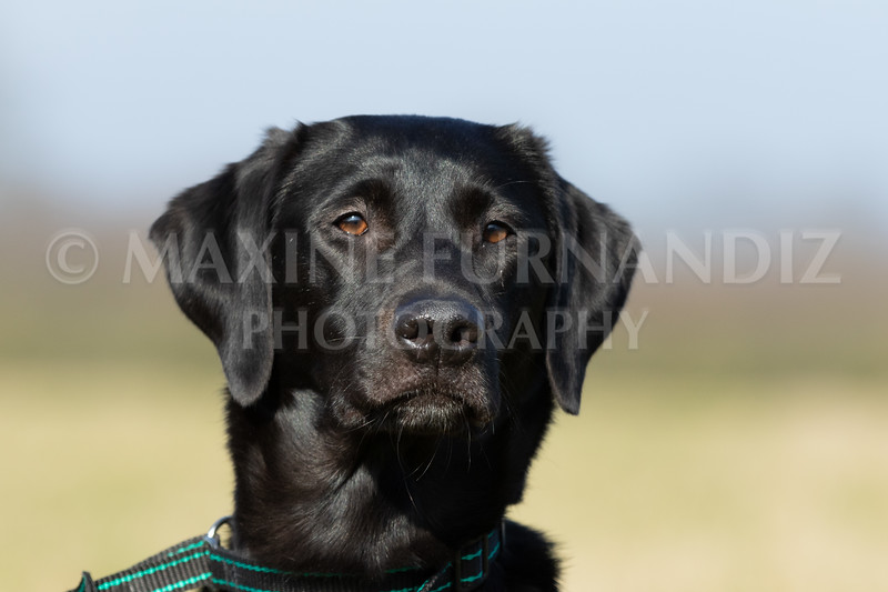 Dog Training Novice GD Feb2019-5725.jpg
