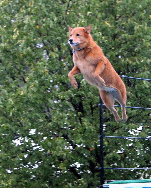 2015.8.7 Winnebago County Fair Dock Dogs (29).JPG