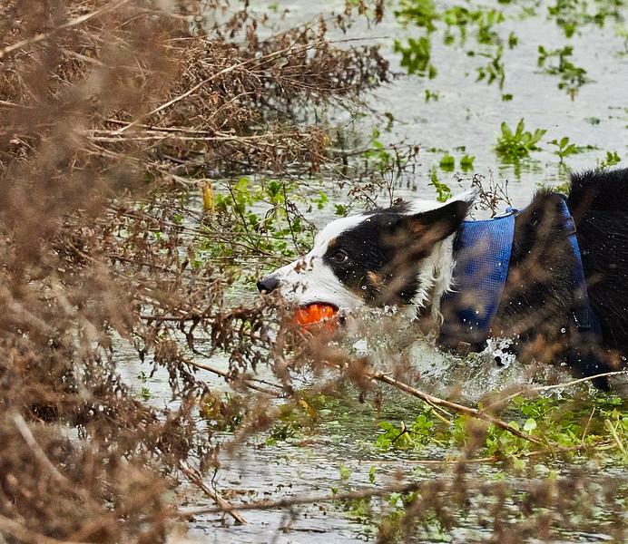 Water Medow-3606.jpg