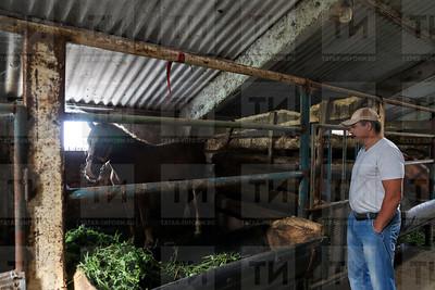 11.08.2018 Конюх из Арского района Равил Гайнутдинов воспитывает лошадей тяжеловозов (Салават Камалетдинов)