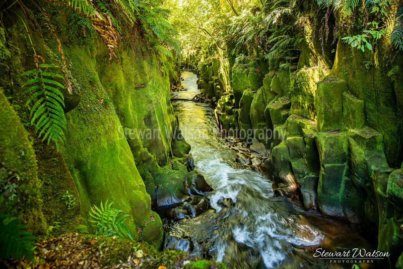 """The """"other worldly """" scenery in the canyon in the Whirinaki Forest (in the middle of nowhere)…what a place"""