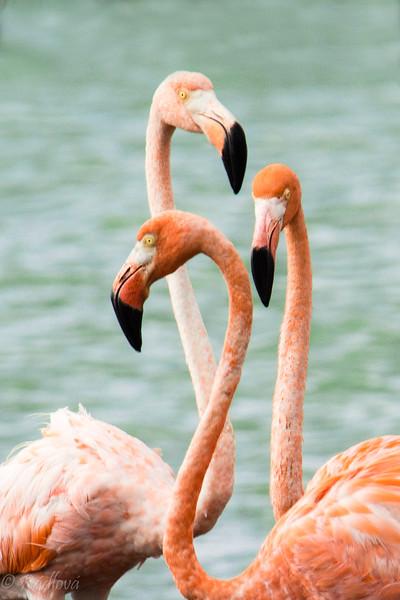 Flamingo Group-.jpg
