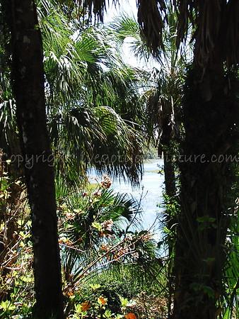 Rainbow Springs, FL March 2013