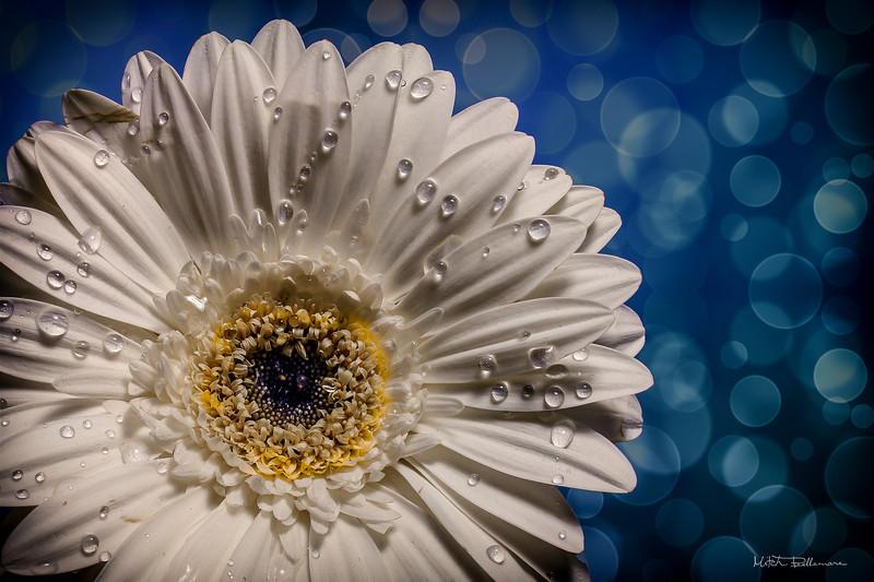 whiteflower3-1.jpg