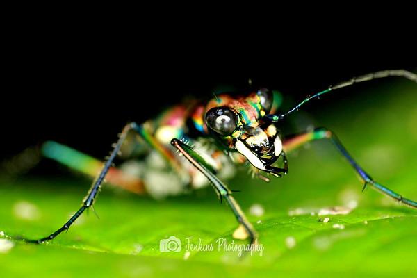 Bugs Home