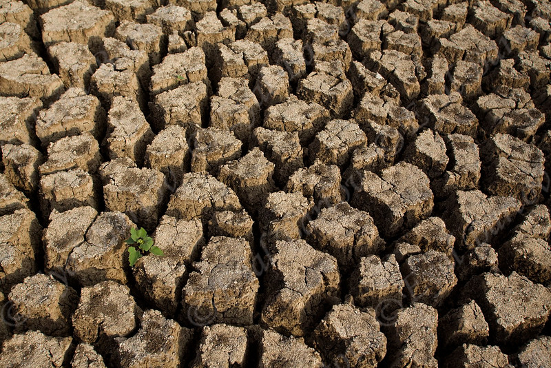 IMG_0371 drought.jpg