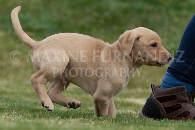 Weika Puppies 24 March 2019-6638.jpg