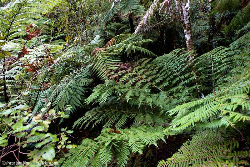 New Zealand bush