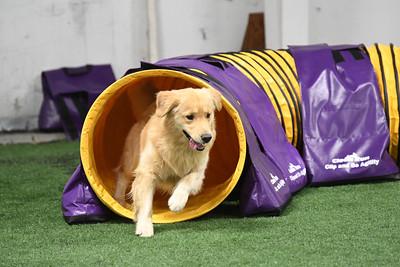 Dauphin Dog Training Club AKC Agility Trial May 20-21