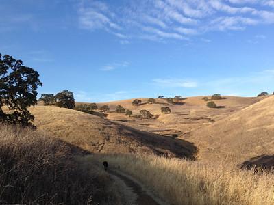 Oak Check - Southeast Lime Ridge