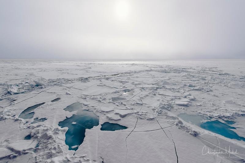 150630_Polar Bear act Ship_9462.jpg