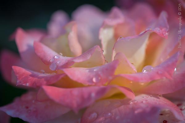 Hudson & Memorial Rose Gardens