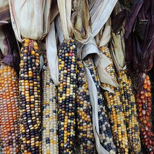 2015 - Midwest Harvest