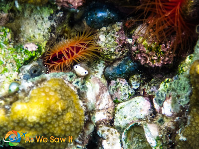 Bocas Del Toro Underwater