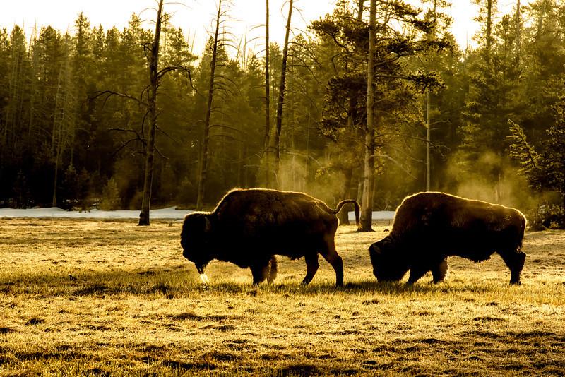 Yellowstone_2014_FH0T0799.jpg