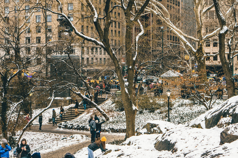 Snow in Central Park.jpg