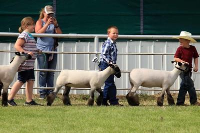 Pee Wee Sheep Showmanship Sat