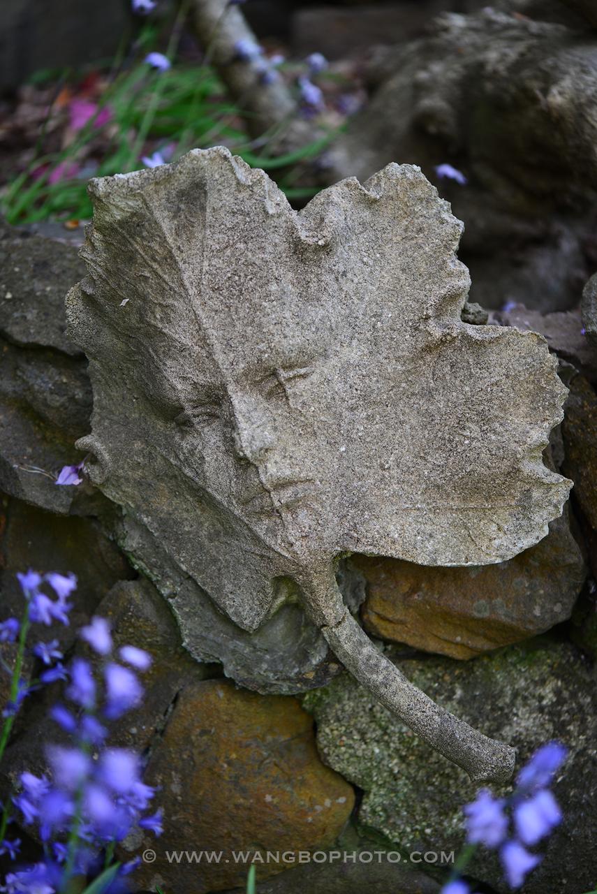 情迷卢拉 -- 去悉尼蓝山私家花园观赏一场色彩华尔兹 - 一镜收江南 - 清韵