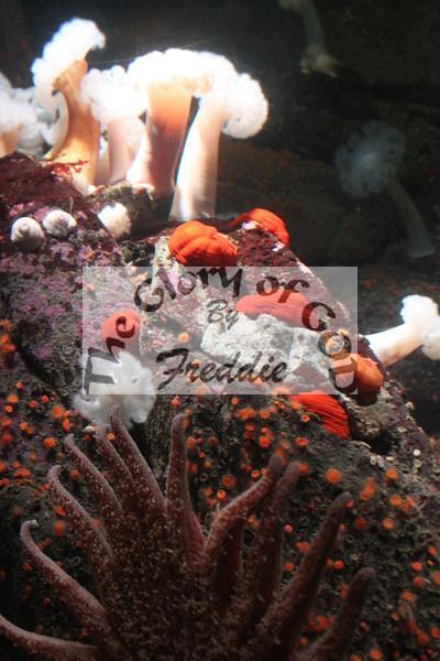 Aquarium 20009.jpg
