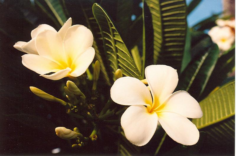 Hawaii-766.jpg