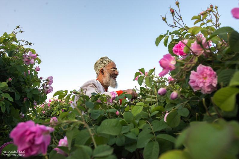 Roses Water (9)-Aljabal Alakhdhar-Oman.jpg