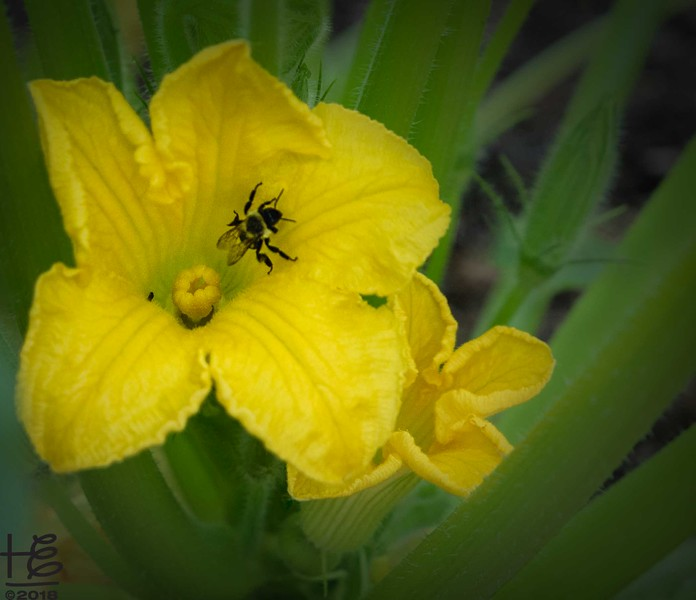 Pollination in-process